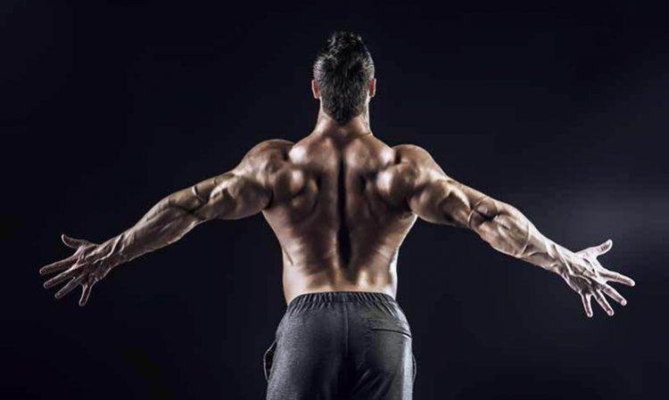 back view muscular man, deadlift