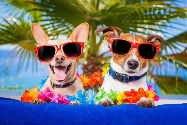 2 cute dogs with sunglasses, weight loss