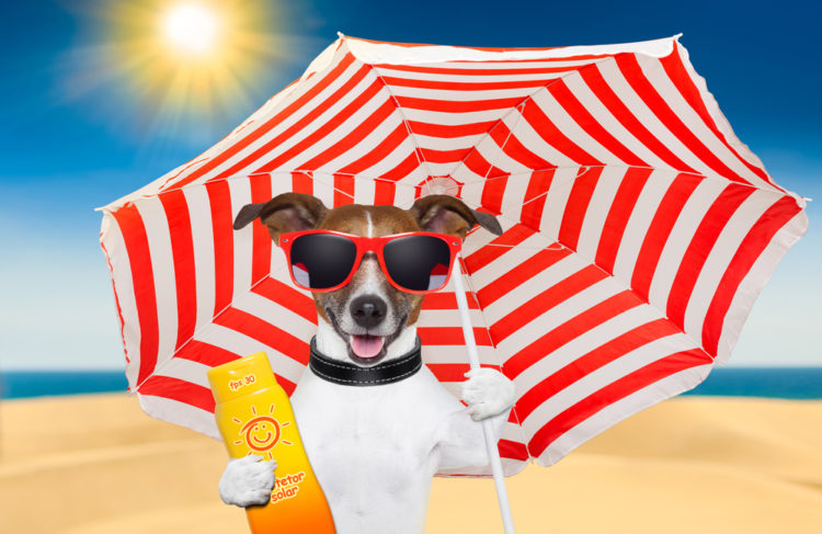 Dog wearing sunglass with red and white striped umbrella and a sunscreen on it's left hand, sun shines brightly on the back, best supplements